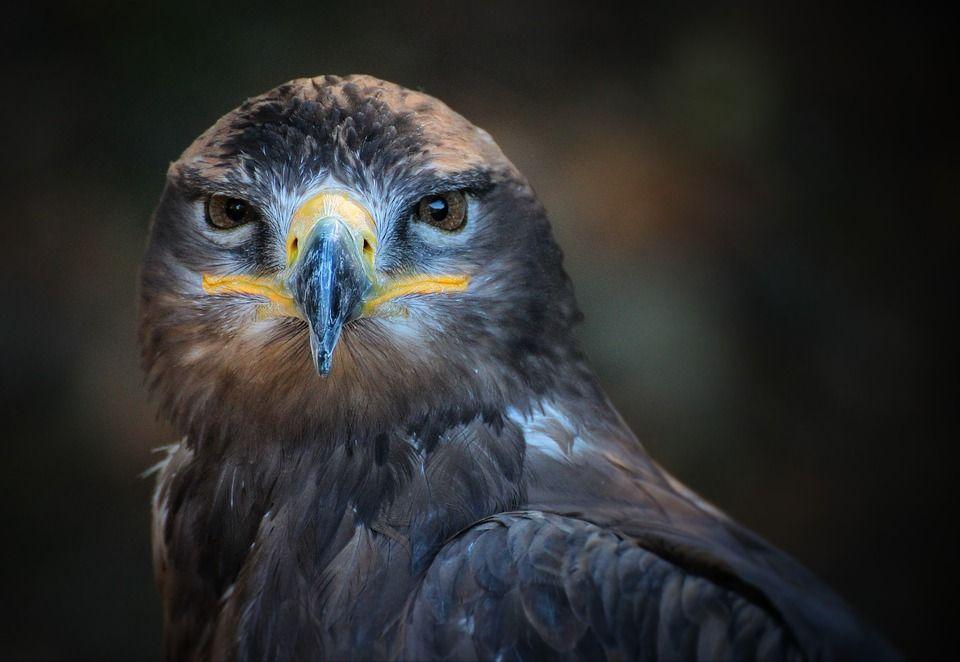 Image gratuite sur pixabay portrait oiseau nature - Images d animaux sauvages gratuites ...