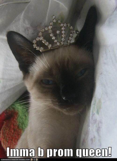Siamese Cat Meme | Funny Prom Queen – Animals With Crown