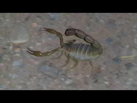 Pin By قناة اغرب الاشياء On Reptileset1animaux Crab