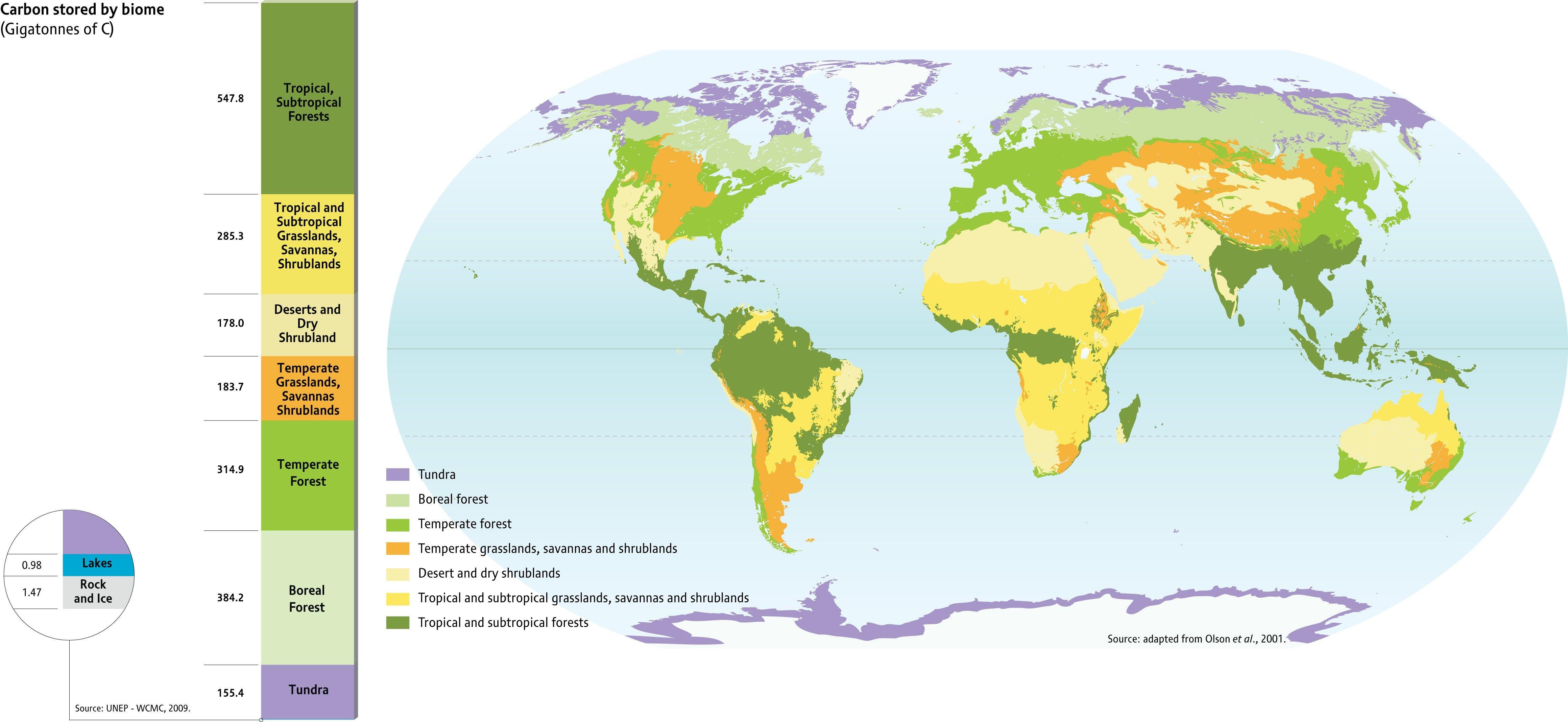 Biome Map Of The World | Worldmap | Biomes, World, Map