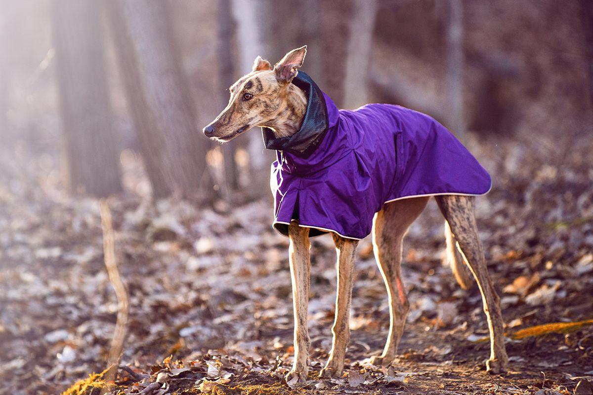 Pin on Greyhound Dog Apparel