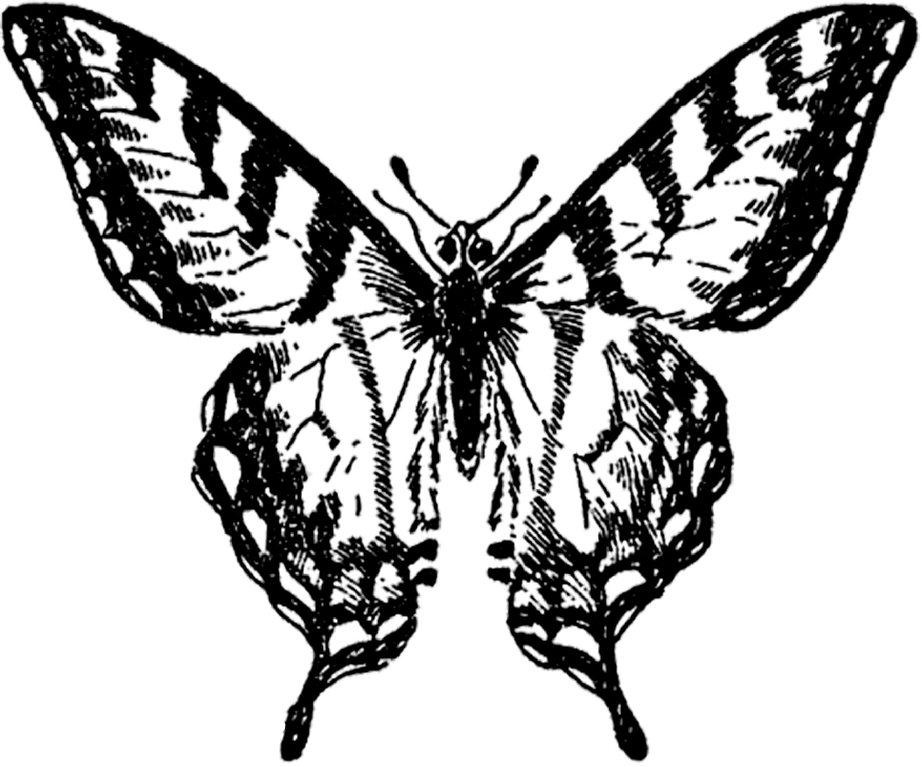 Vintage Butterfly Image