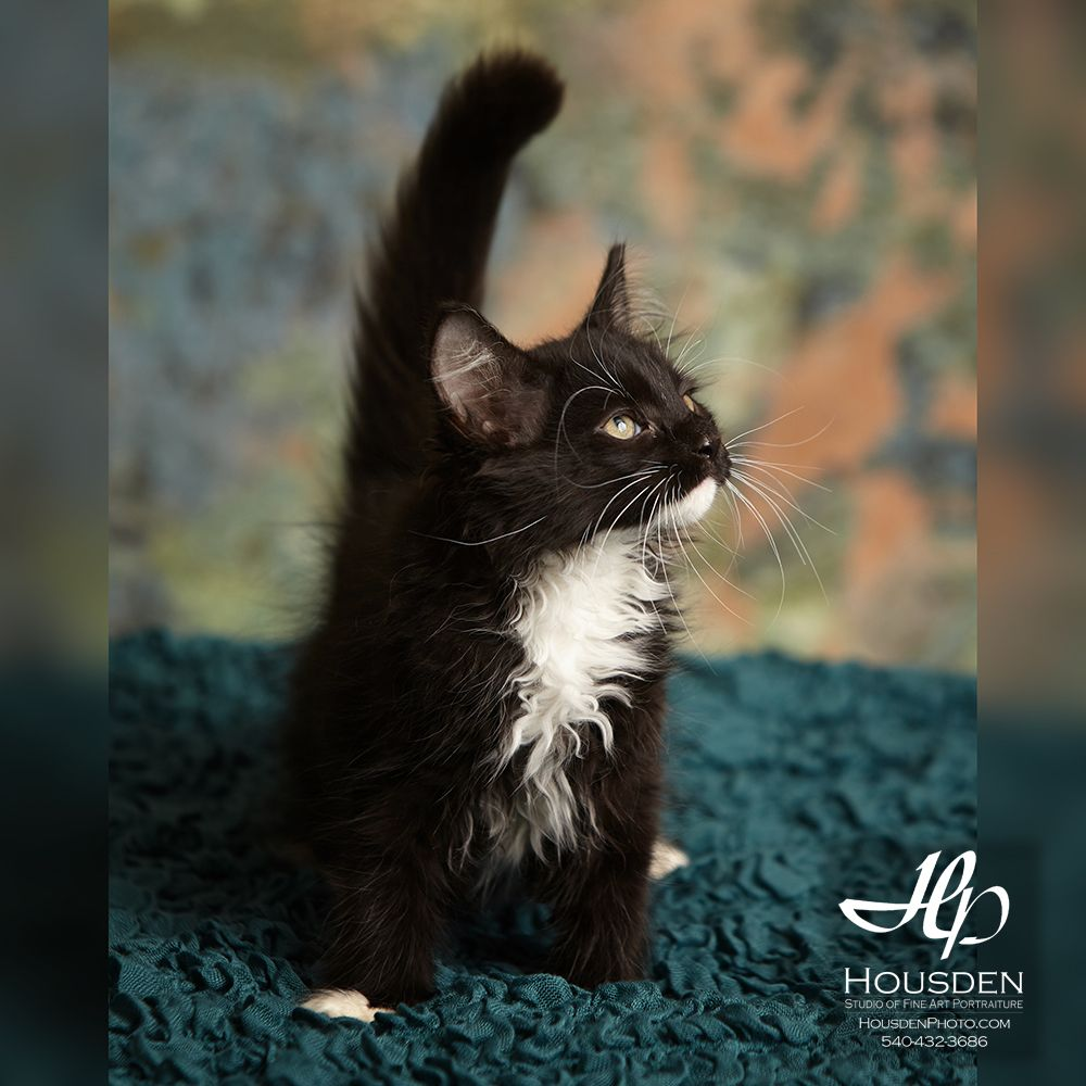 Fuzzy little Graham can't wait to play with you! rhspca