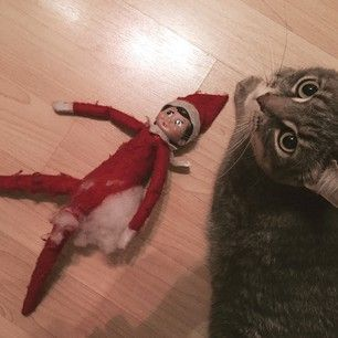 This cat who unapologetically put an end to Elf of the Shelf. | Community Post: 15 Of The Biggest Christmas Decoration Fails Ever