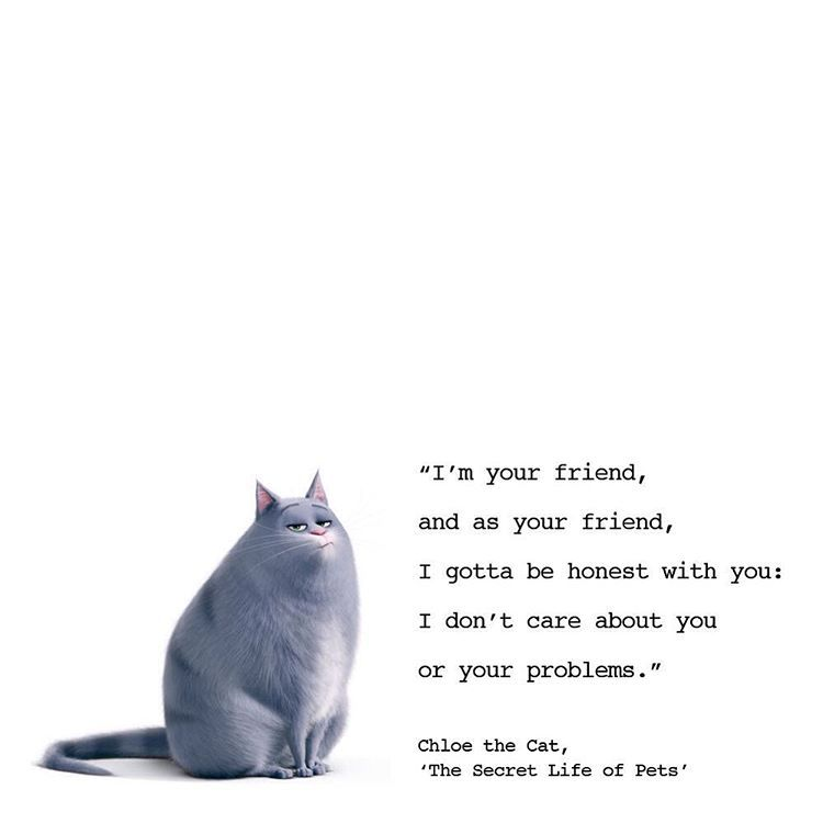 Enjoyed Watching The Secret Life Of Pets With Kitty S Brownie Pack Last Night Loved This Snarky Cat Bes Secret Life Of Pets Pets Movie Funny Animal Quotes