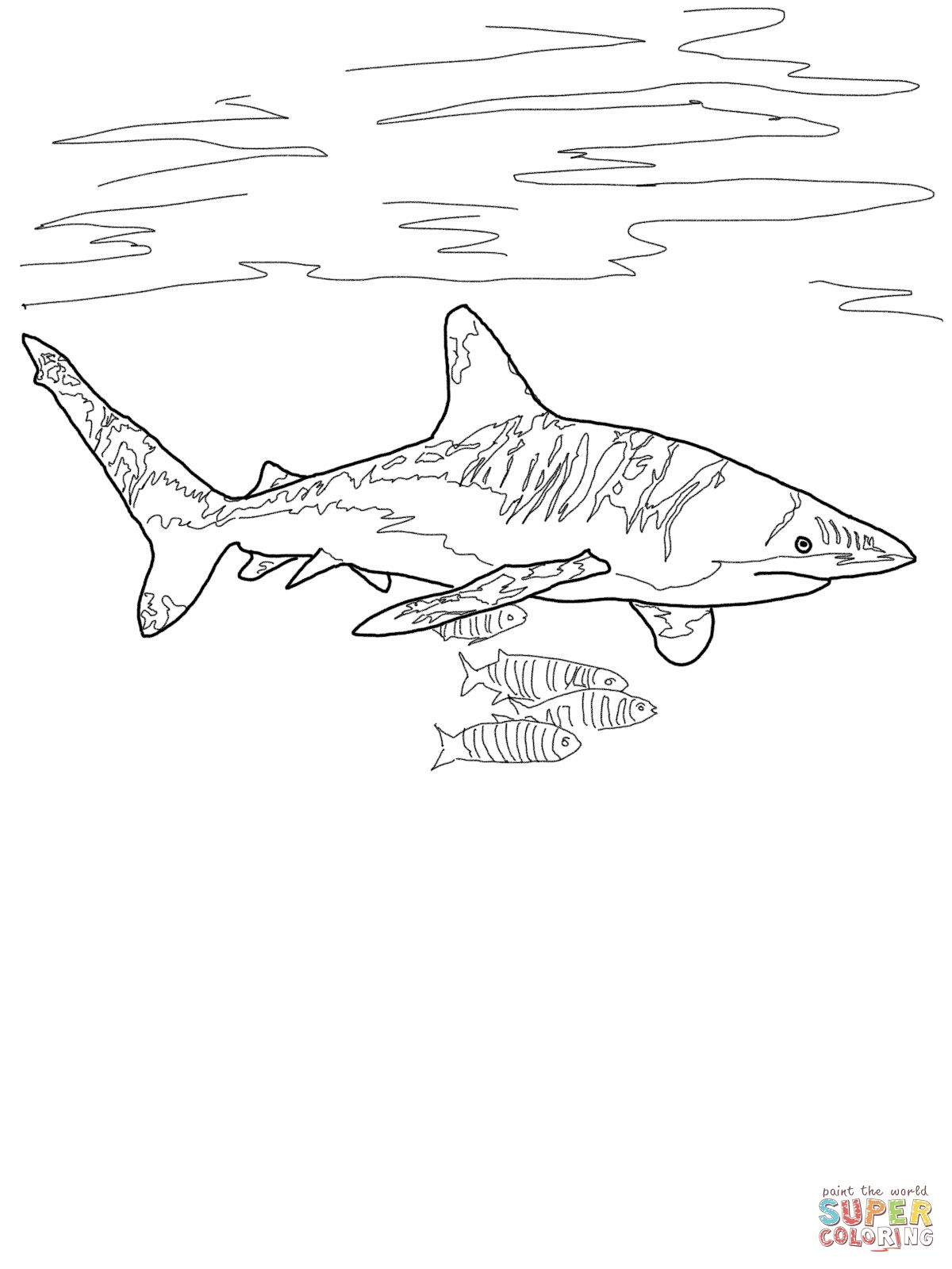 Oceanic Whitetip Shark Super Coloring Shark Drawing Shark