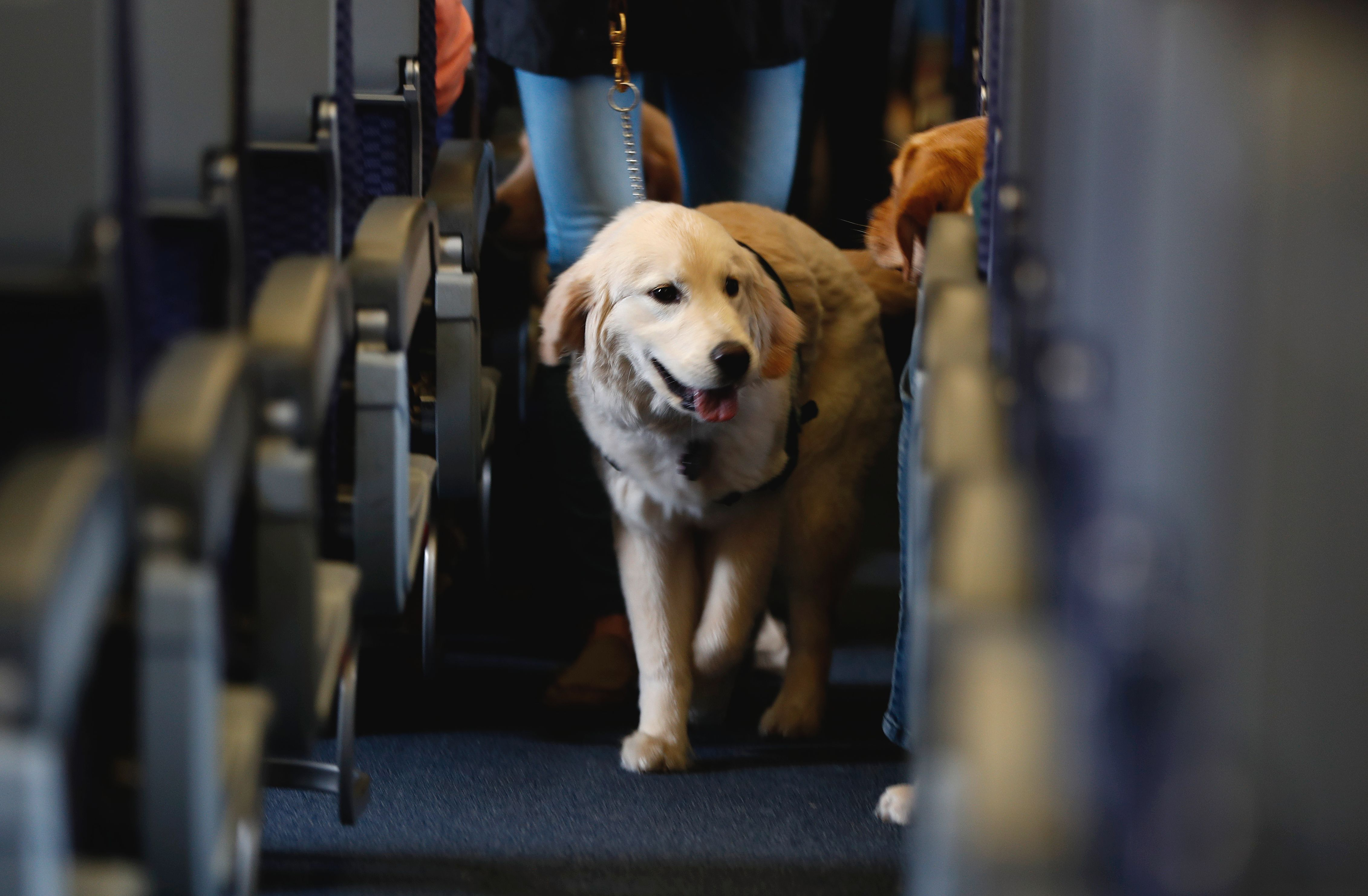 Dozens of dogs fill Newark airport terminal (With images
