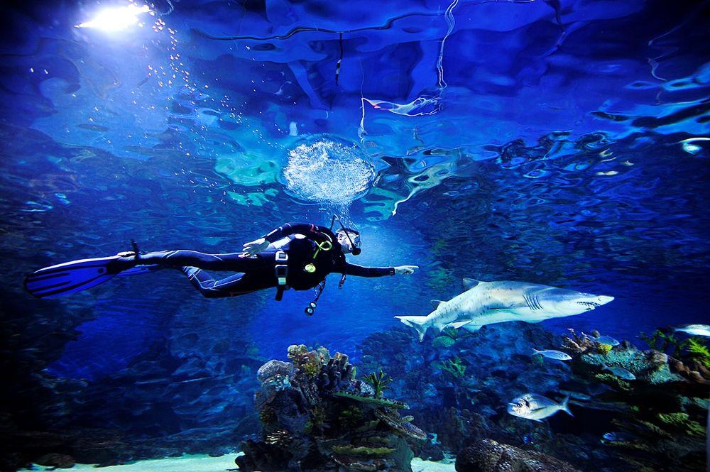 Keep calm and dive with sharks at Turkuazoo Aquarium
