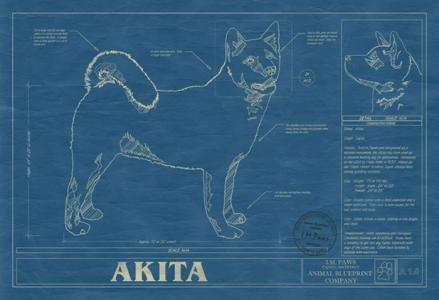 Animal blueprint company akita dog blueprint dog blueprints animal blueprint company akita dog blueprint malvernweather Gallery
