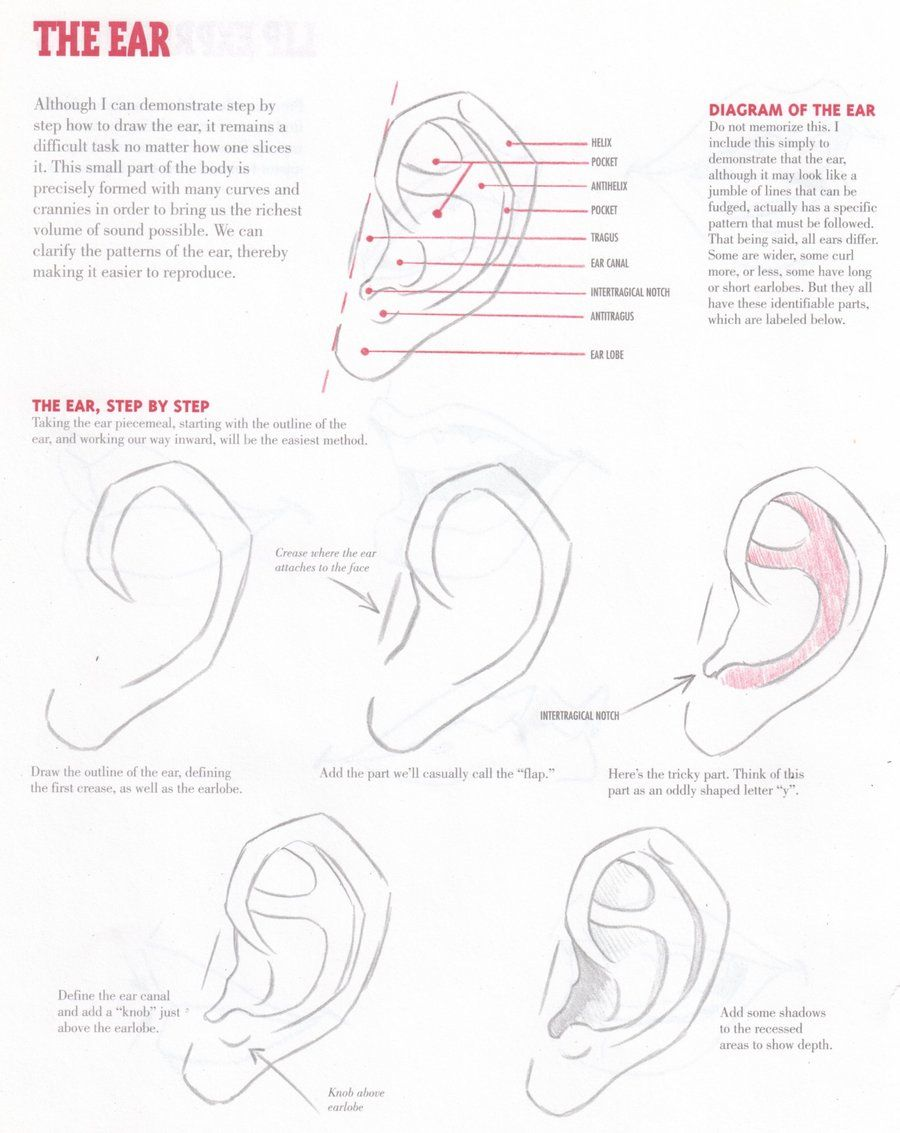 Ear Tutorial By Christopher Hart Character Design References キャラクターデザイン Find More At Https Www Facebook Com Characterdesignreferences S Izobrazheniyami Uroki Risovaniya