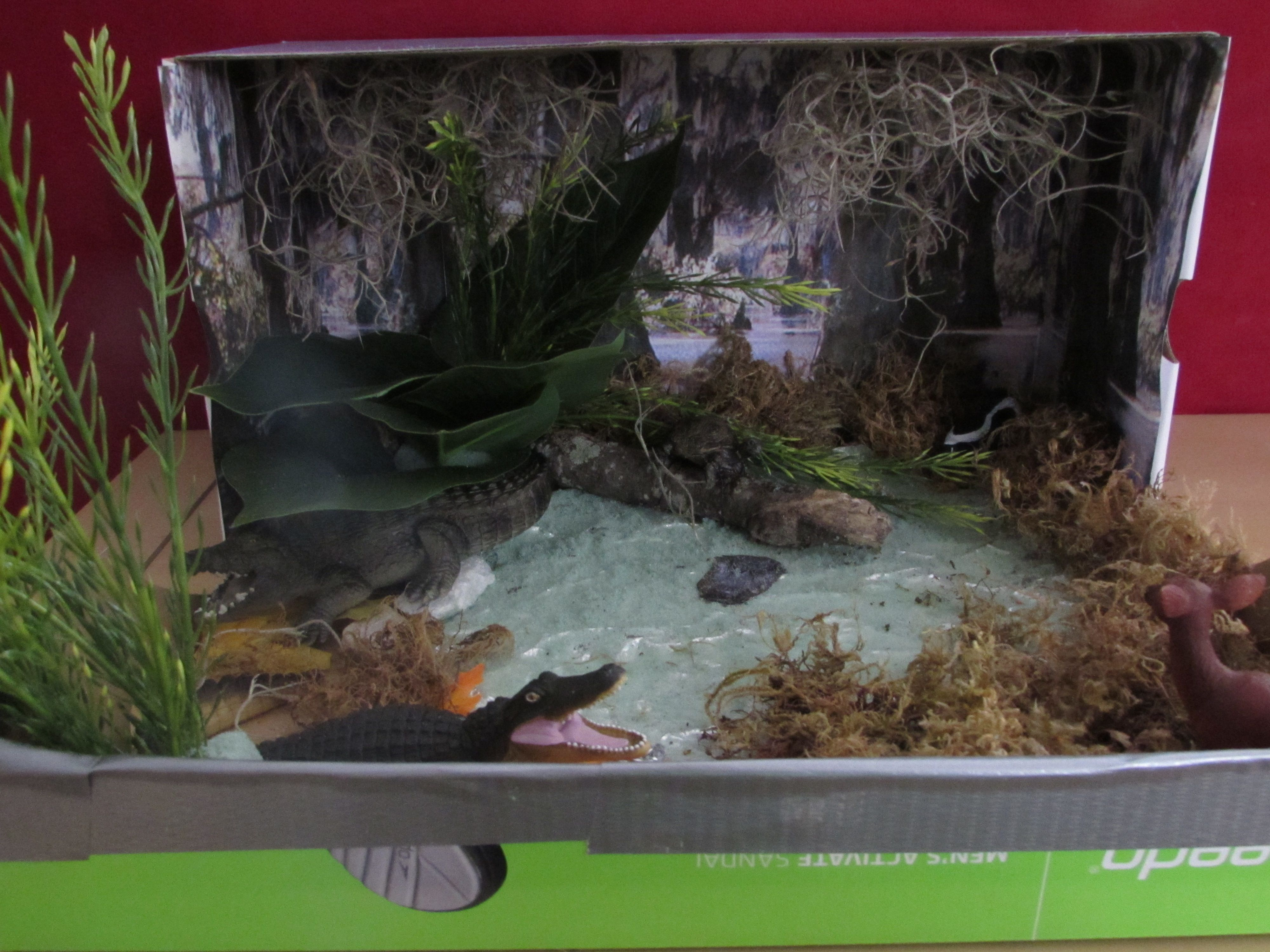 3rd Grade Georgia Science Project Create A Habitat For A Local Animal Alligator Thanks To All