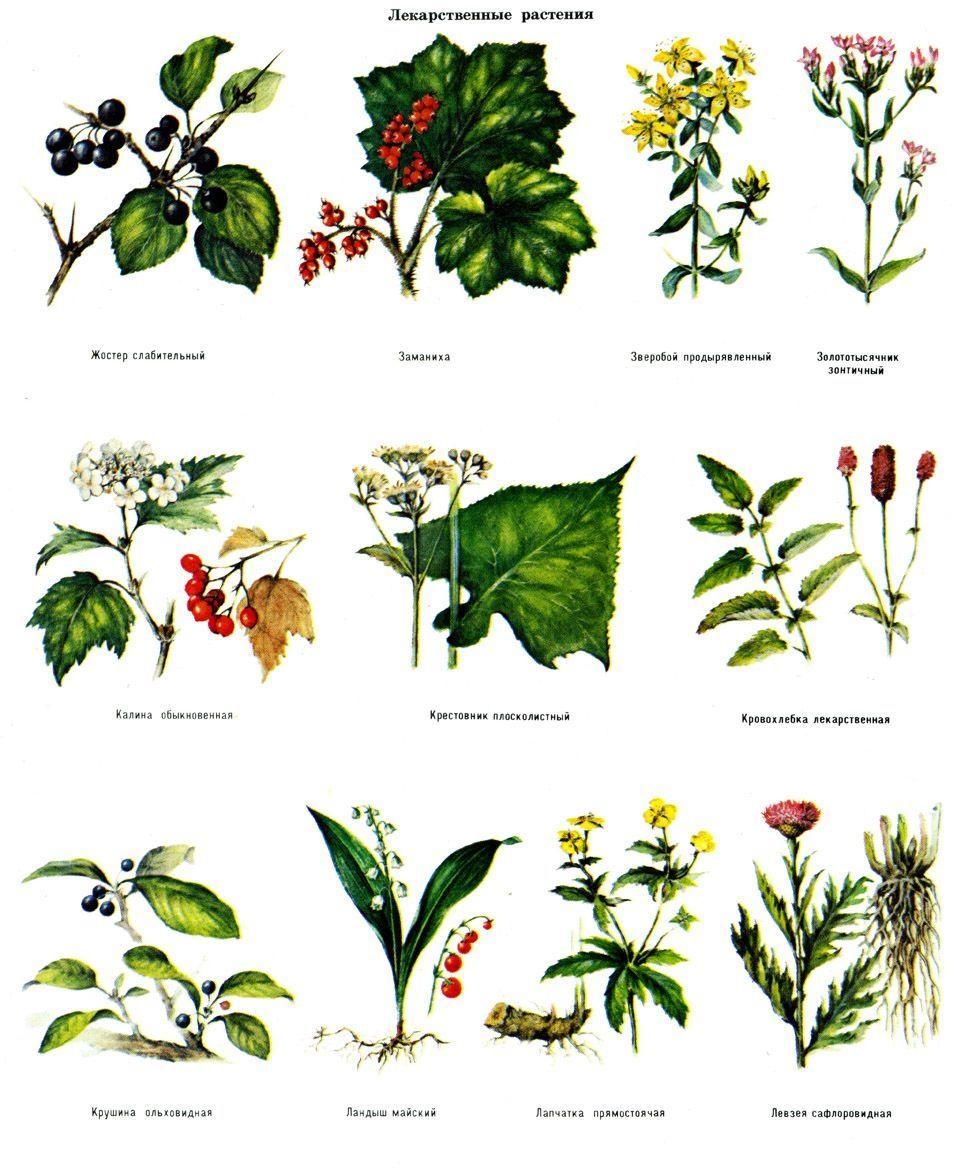 Все растения россии список