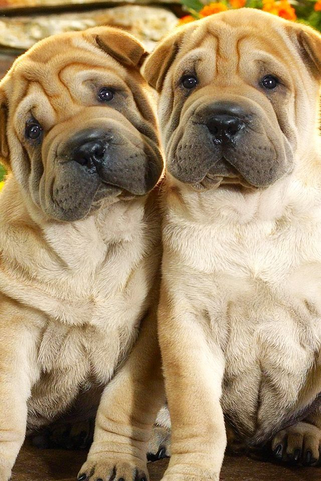 Oh my goodness they must be twins - Too cute.