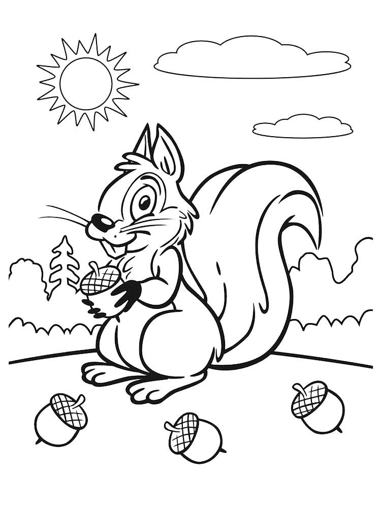 Squirrel Coloring Page. Squirrel is a rodent mammal