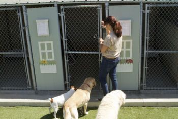 Dog Kennel Daycare Soundproofing Dogs Dogs Kids Dog Runs