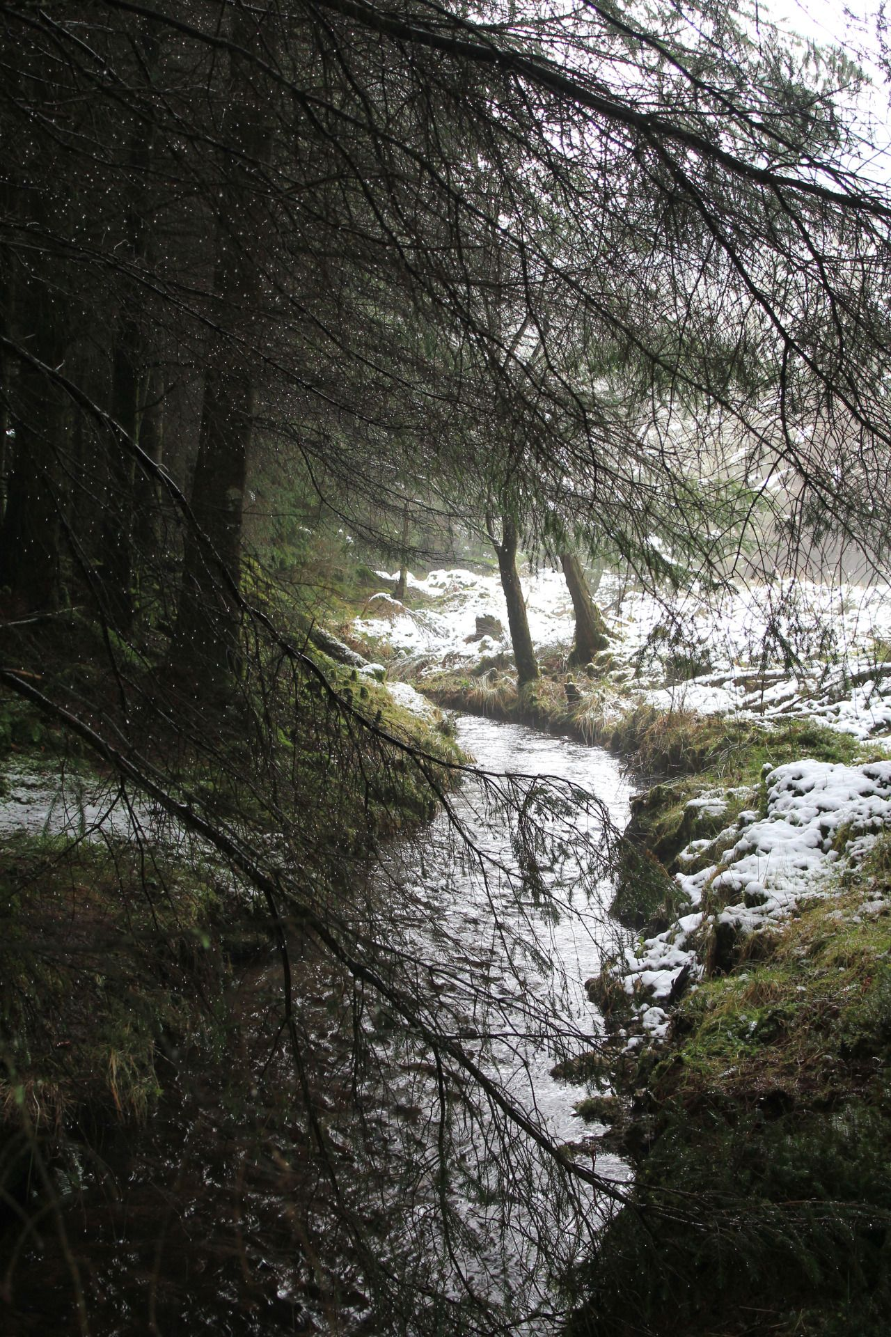 Another world and universe citizen... — stephenearp:   The stream and the melting snow