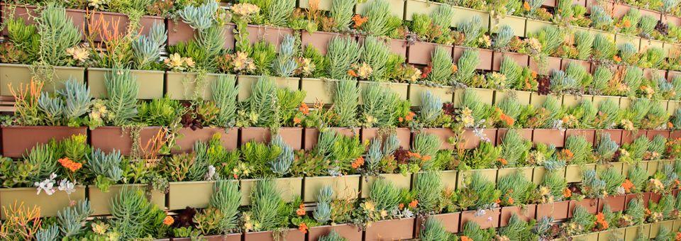 Diy Framed Art, Garden Solutions, Pinterest Garden, Succulent Wall, Plant  Wall,