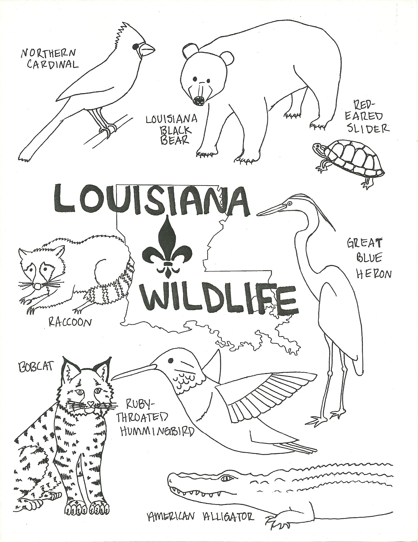 Louisiana Wildlife Coloring Page Free Download Printable
