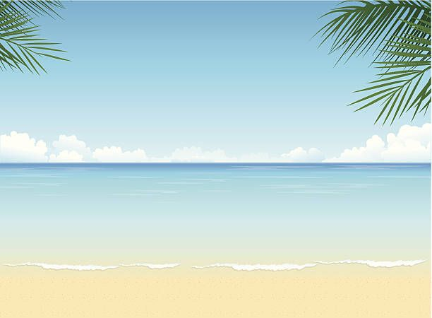 tropical beach vector art illustration animals pinterest