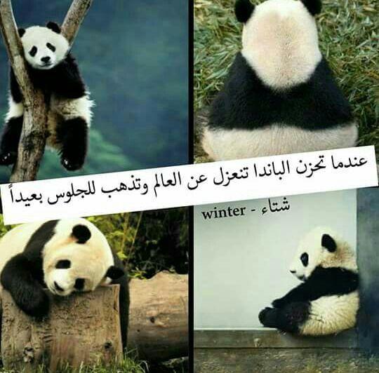 مثلي تماما Funny Arabic Quotes Arabic Funny Medicine Quotes