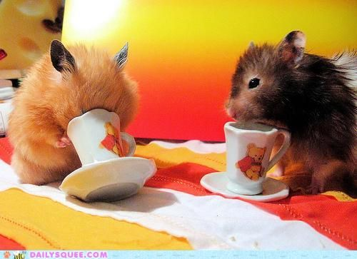 I love hamsters. They are so cute. Unfortunately i just