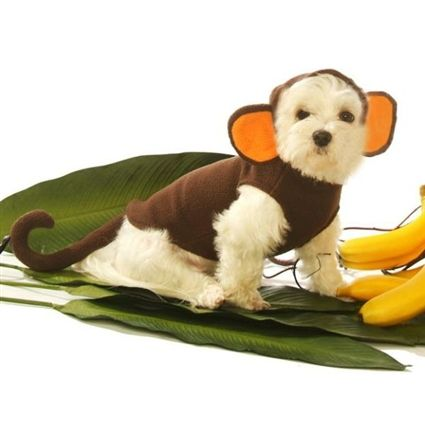 Monkey Halloween Dog Costume Pet Halloween Costumes Dog