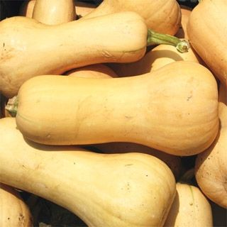 Squash Frisco Hybrid in The Big Seed Book from Park Seed on shop.CatalogSpree.com, my personal digital mall.