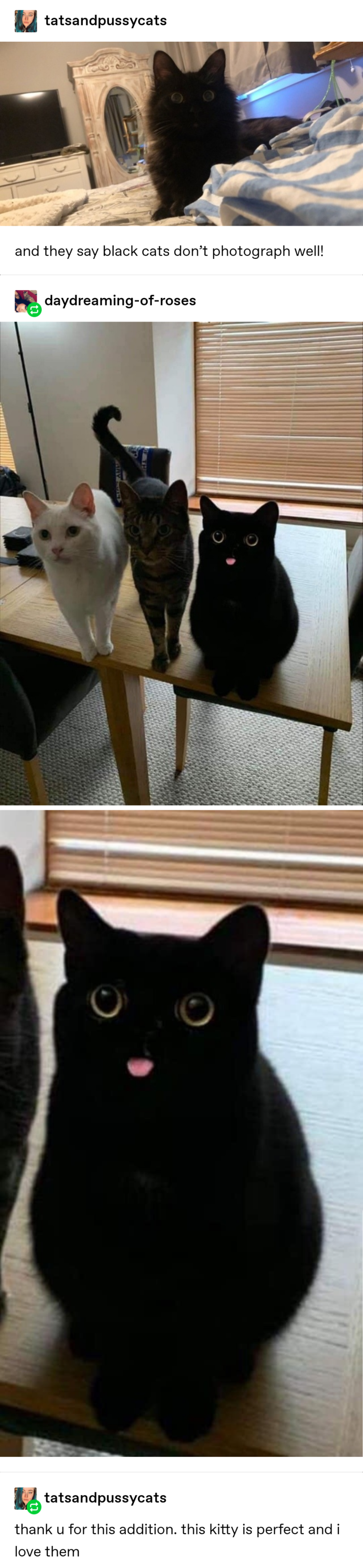 New Funny Cute 38 Times Tumblr Really Understood What Cats Are All About 38 Times Tumblr Really Understood What Cats Are All About 1