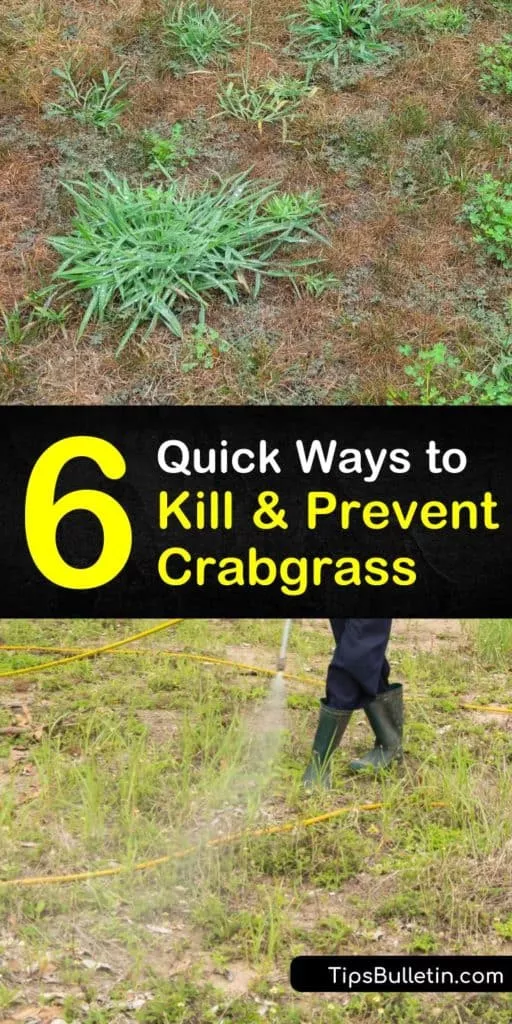 e227d2fe77ee5148917420b306636151 - How To Get Rid Of Corn Speedwell In Lawn