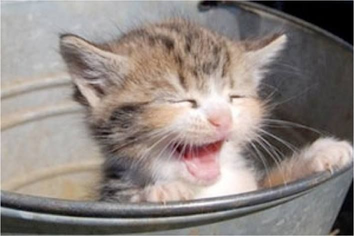 Pin by Cyndy Young on More animal cuties Kitten meowing