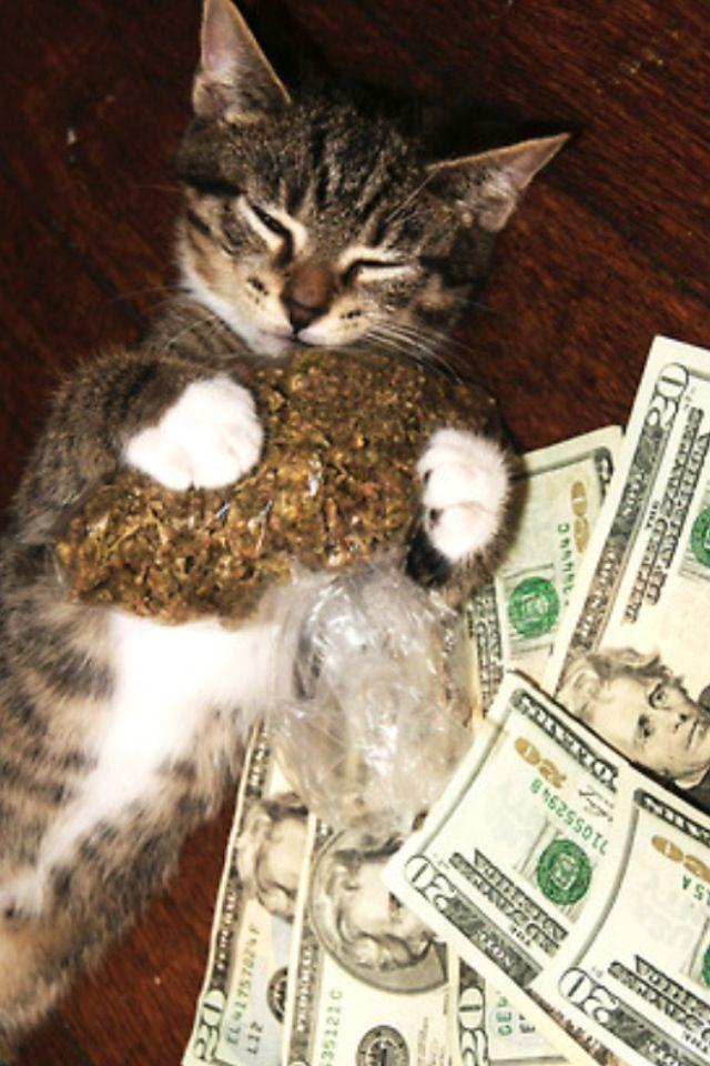 Pussy money weed   ani...