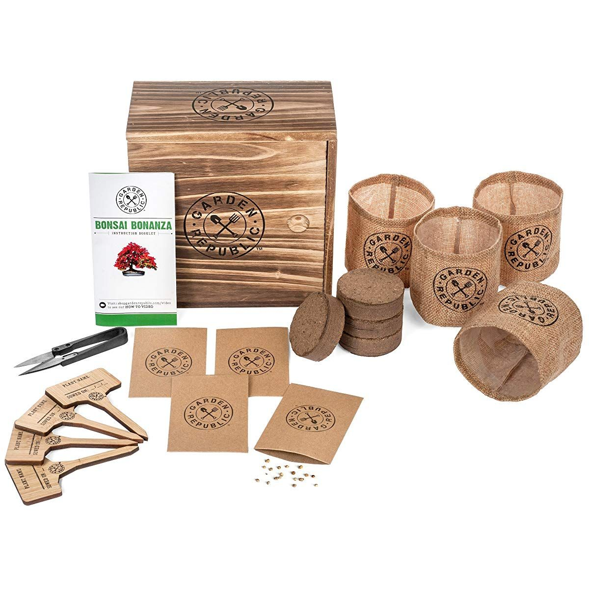 Bonsai tree seed starter kit indoor garden gardening