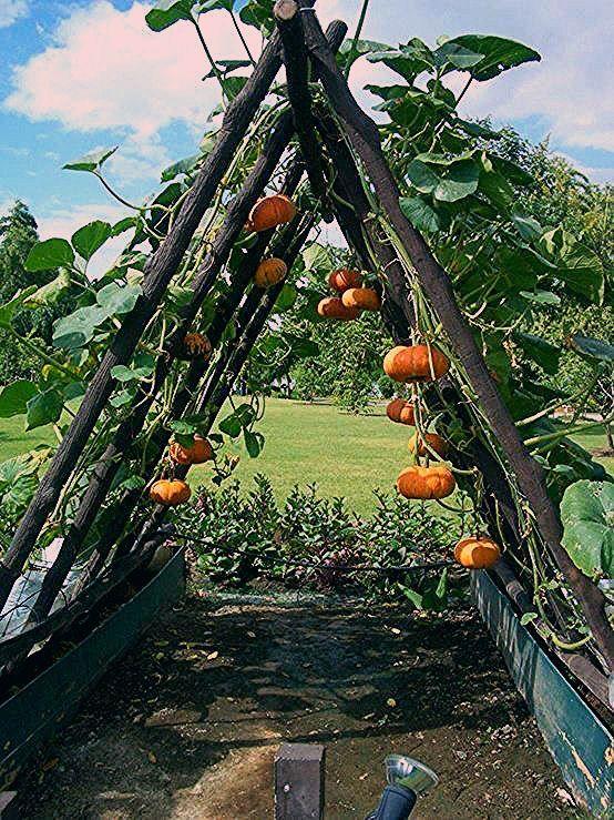 Photo of 20 brillante DIY Garten Dekoration Ideen – Garten Herbst Idee