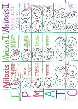 Mitosis/Meiosis I/Meiosis II Comparison Anchor Chart | Cell