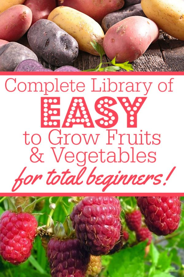 13+ Easy To Grow Veggies & Fruits for Absolute Beginning Gardeners is part of Vegetable garden for beginners, Plants for small gardens, Easy vegetables to grow, Growing fruit, Organic vegetable garden, Growing vegetables - Look like a total gardening genius with our list of the EASY to grow veggies and fruits for absolute beginning gardeners!