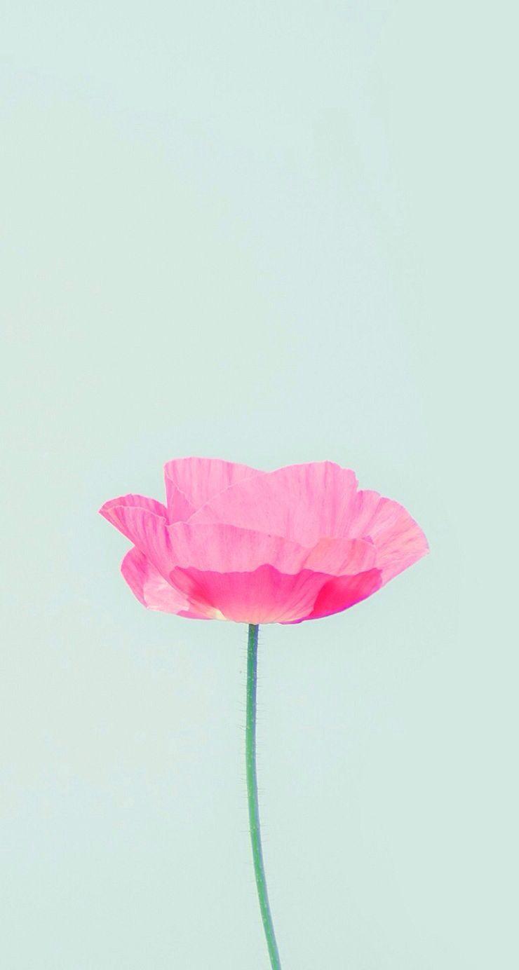 Spring Simple Iphone Wallpaper Flower Wallpaper Wallpaper Iphone Cute