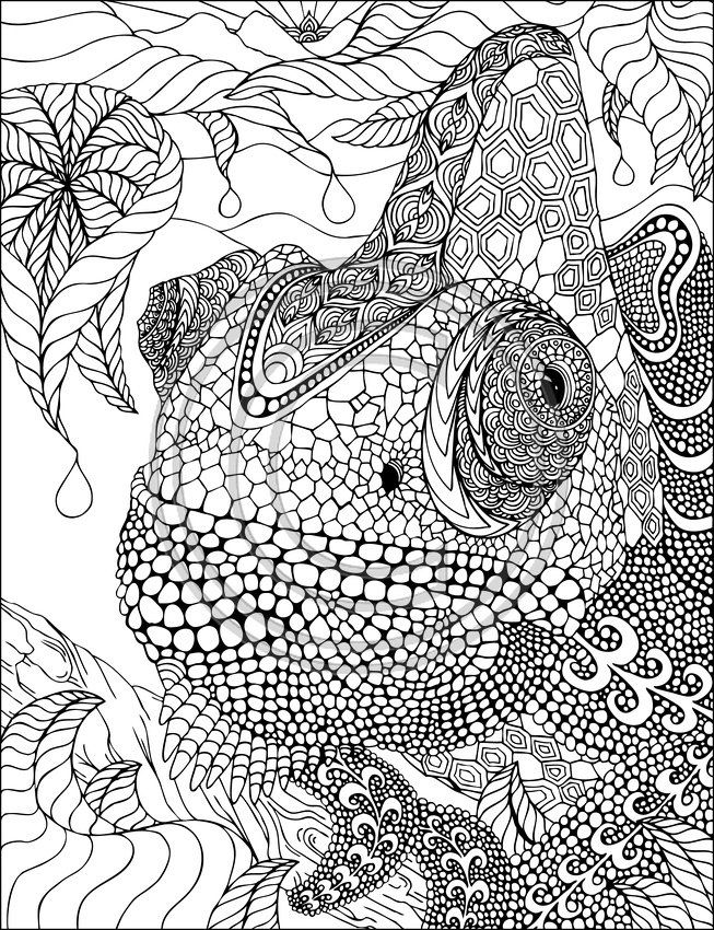Lovely Chamelon Zentangle by Phil Lewis Art Coloring Books for