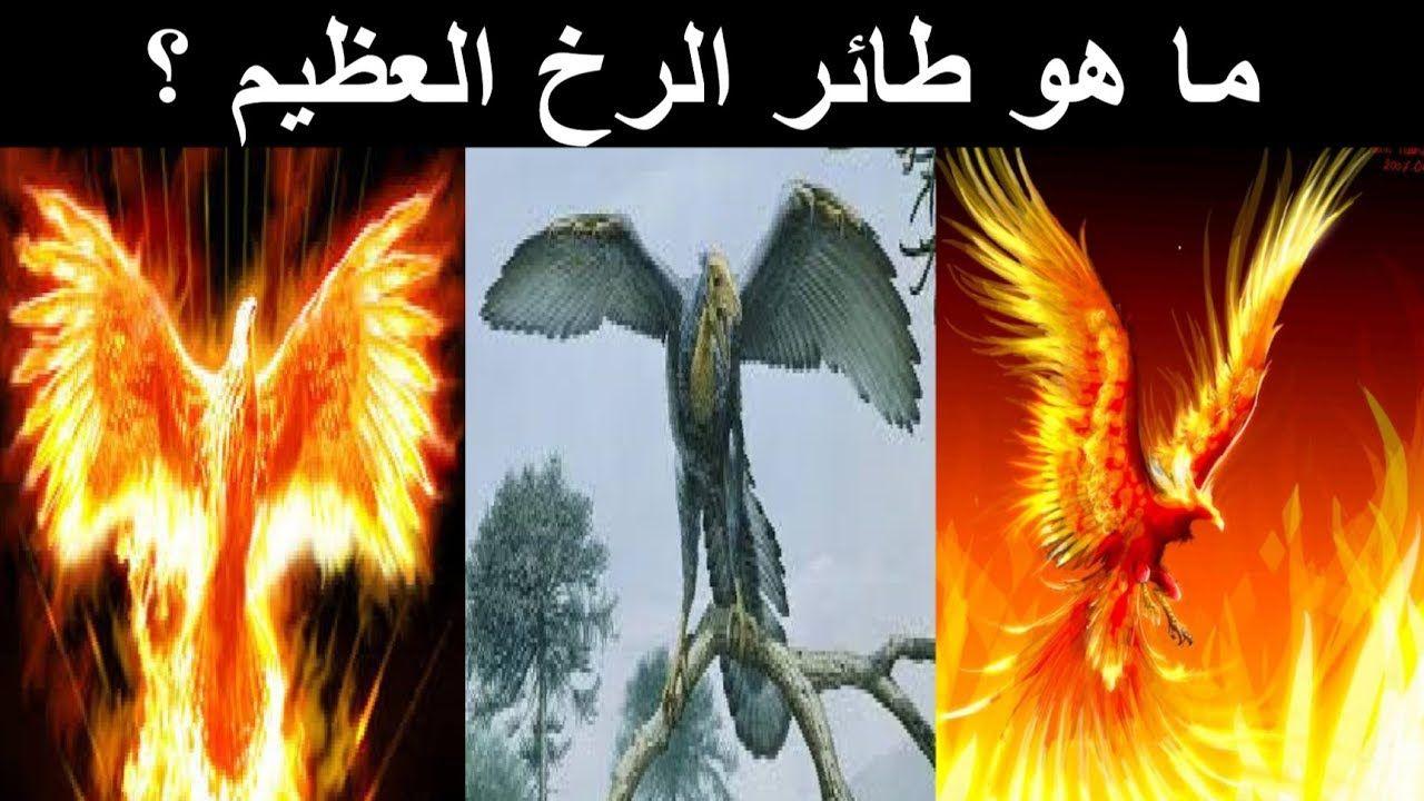 طائر الرخ ما هو اكبر طائر في العالم اسطورة ام حقيقة Mythology Myths Egyptian