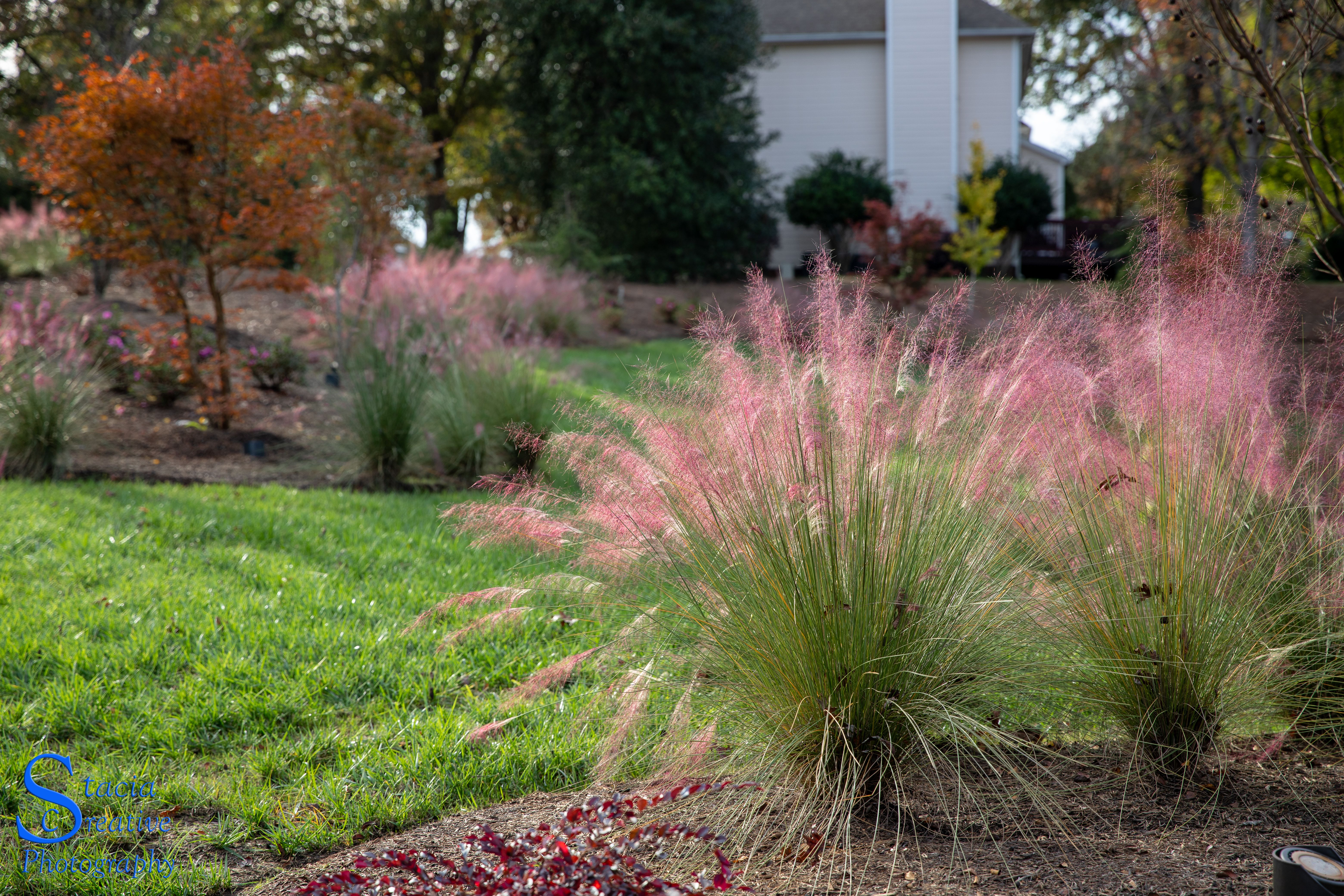 Elegant Ornamental Grasses To Grow In Any Garden Landscape Design Evergreen Landscape Landscaping Inspiration
