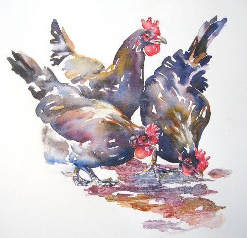 Chickenweb Oiseau D Aquarelle Peinture De Coq Et Art De Coq