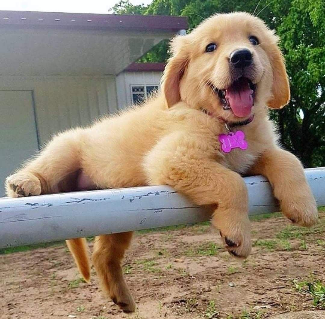 Pin By Olivia Morris On Puppy In 2020 Cute Baby Animals Cute