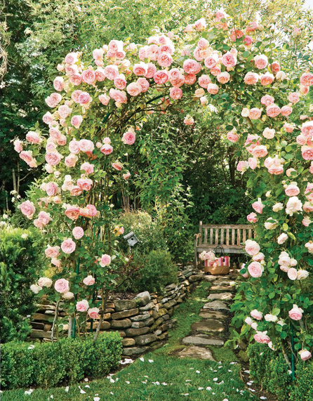 Arbor with pink climbing roses.