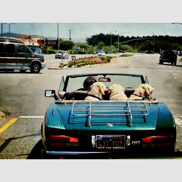 Doggy dog world!