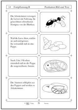 Bildergebnis für ameise projekt kindergarten | Ameisen - Insekten in ...