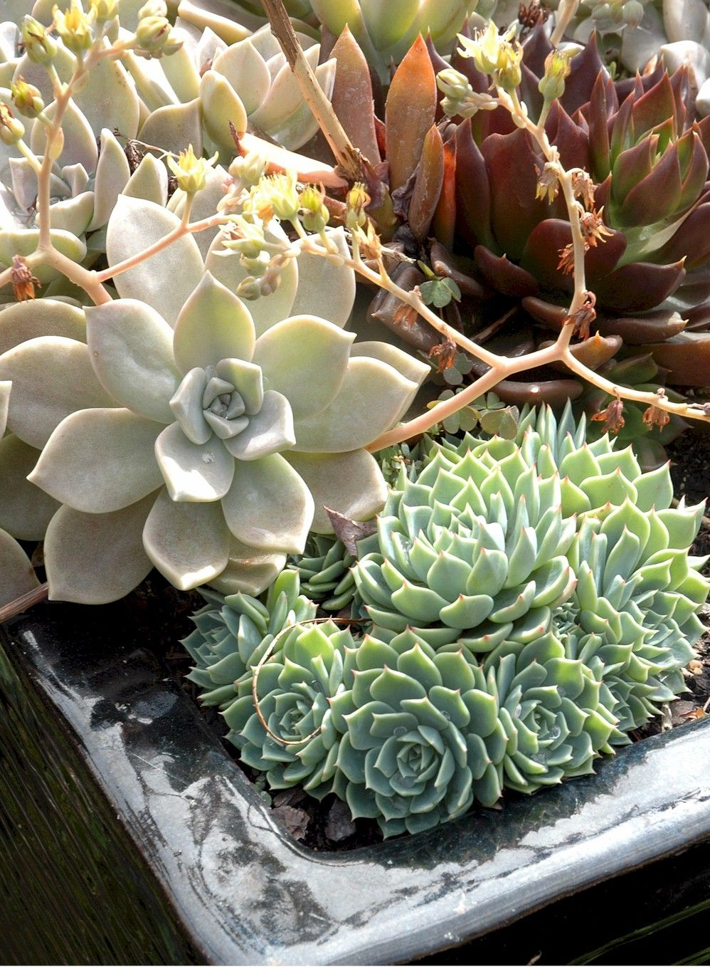Prepare Your Garden for Fall Succulents (With images ...
