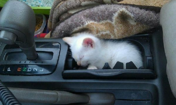 Images For: 2013 Funny Cat Sleeping / Pictures / Photos / Strangest Places for a Cat Nap