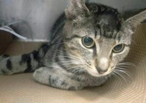 To Be Destroyed 10 08 16 Flint Has A Fractured Leg And Needs