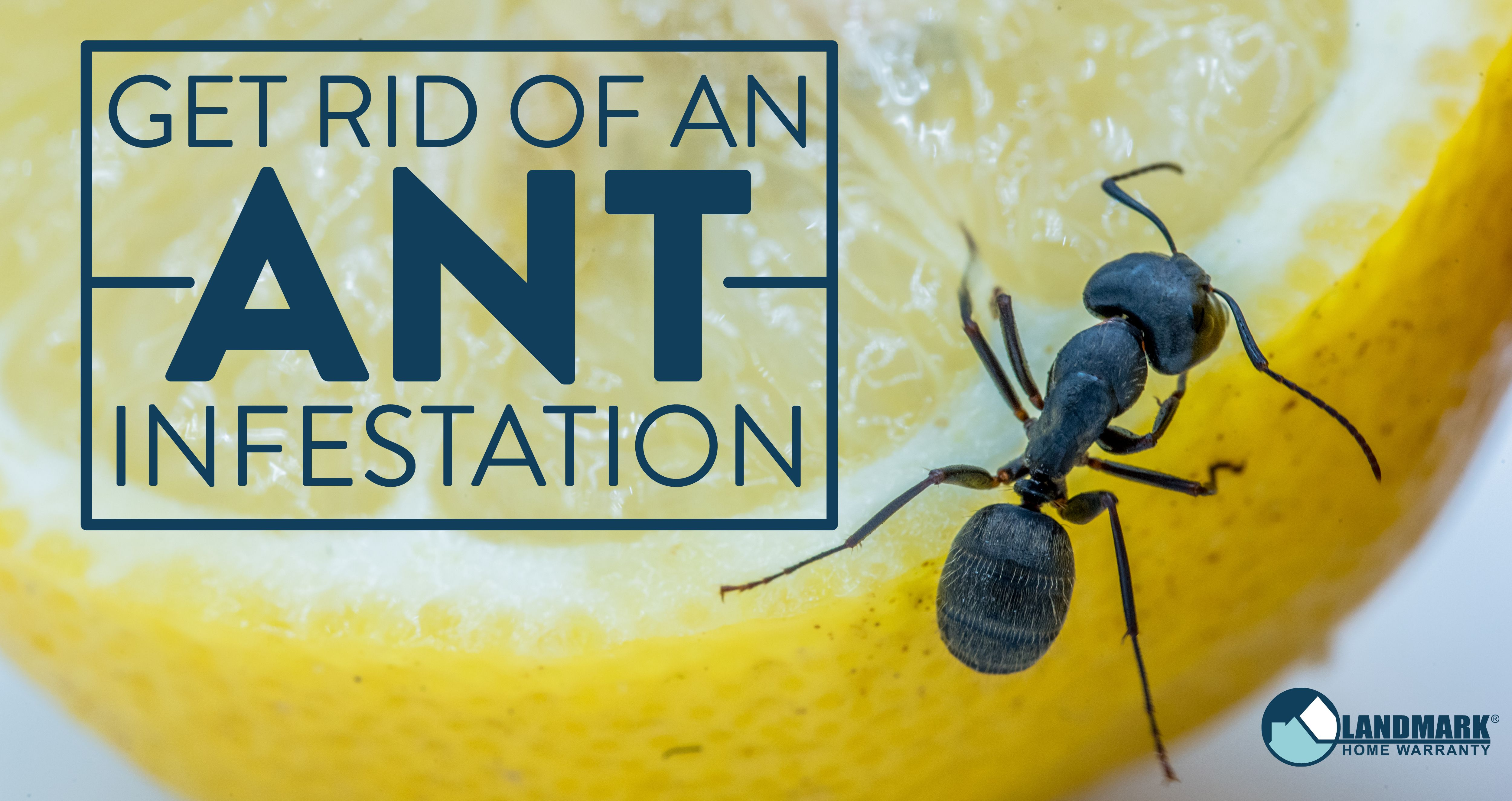 Home Remedies To Get Rid Of Ants Hunker Get Rid Of Ants Rid