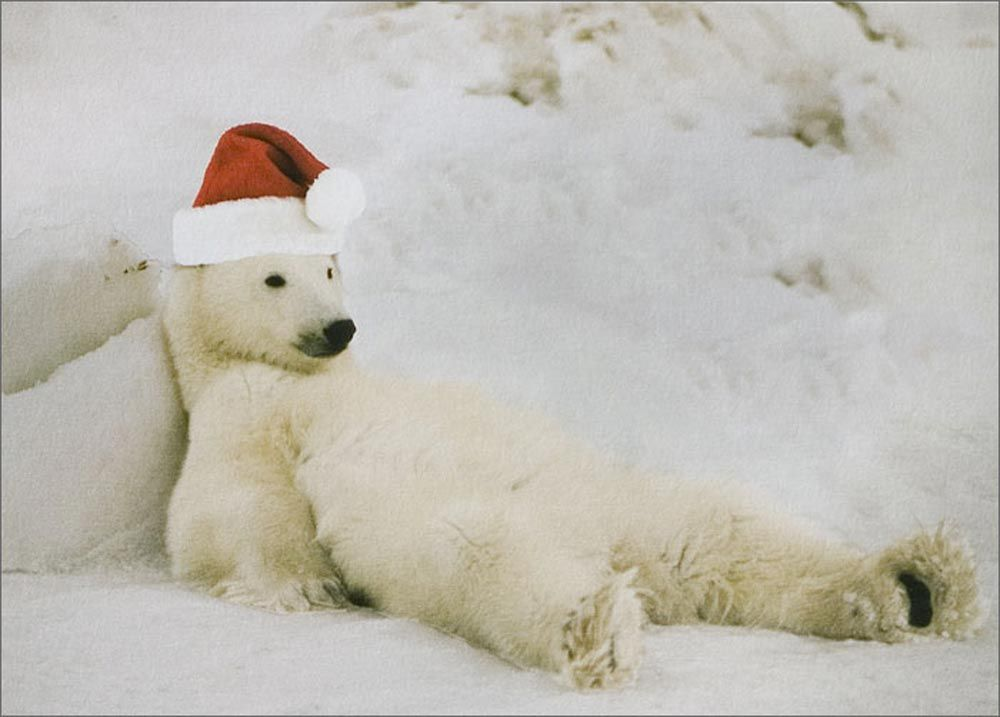 polar bear christmas image to our independent friends. Black Bedroom Furniture Sets. Home Design Ideas