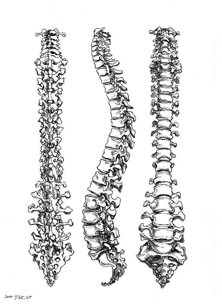 tumblr brain inside skeleton